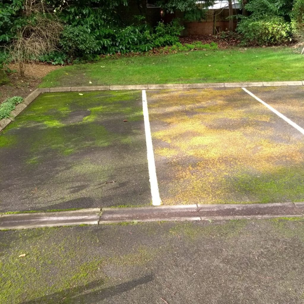 remove moss and algae from the garden