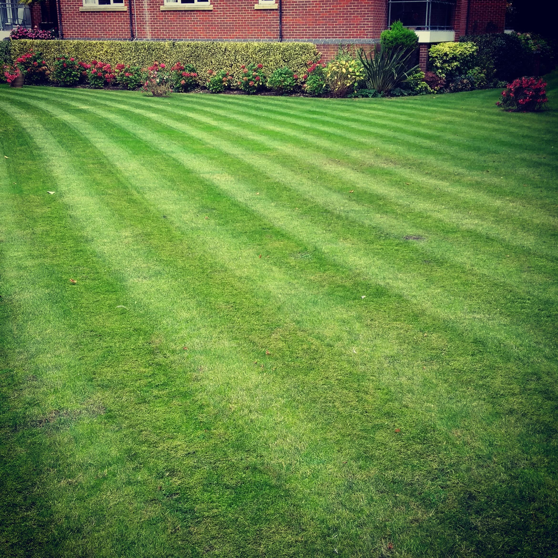 Lawn stripes garden