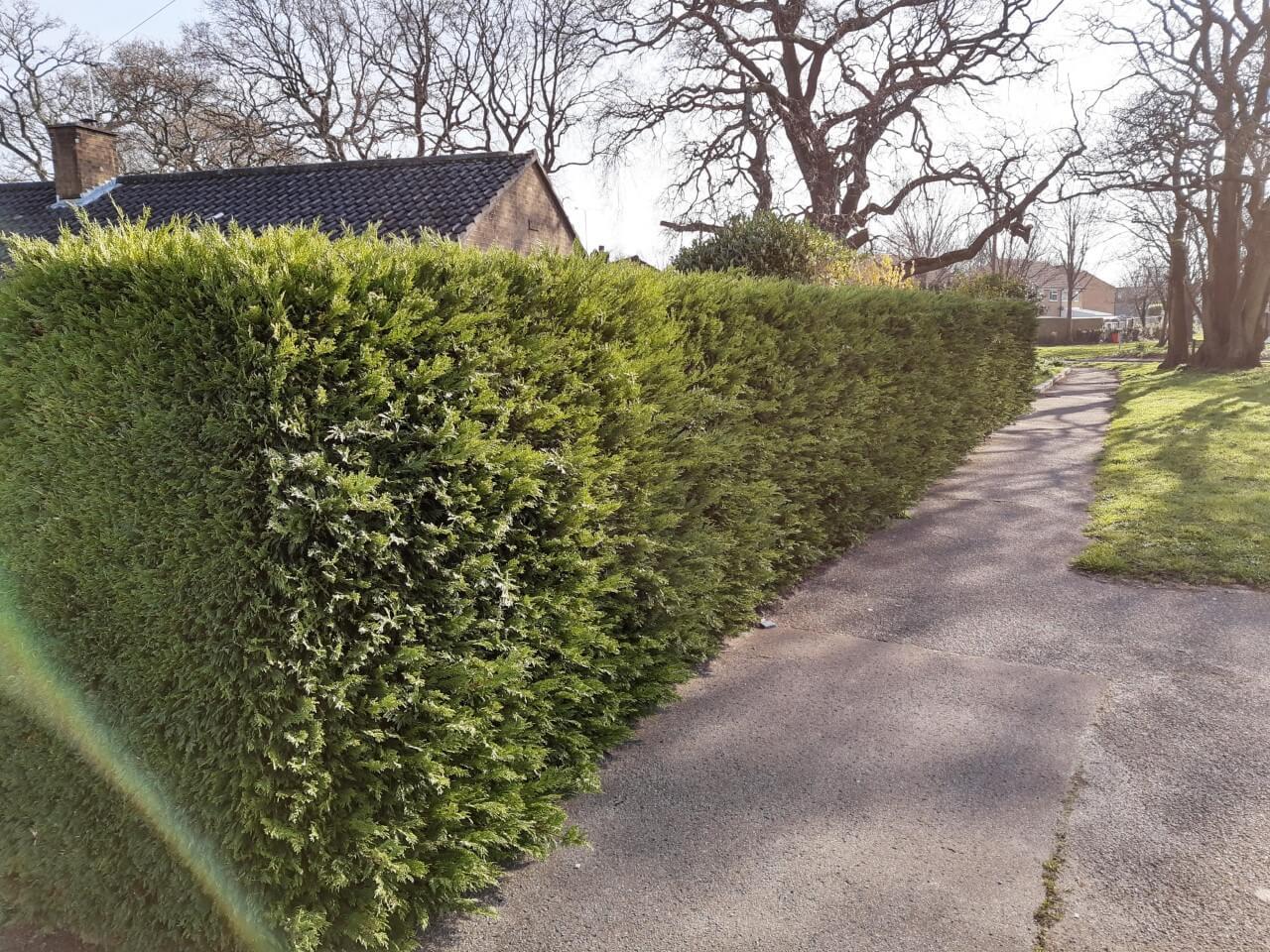 hedge before
